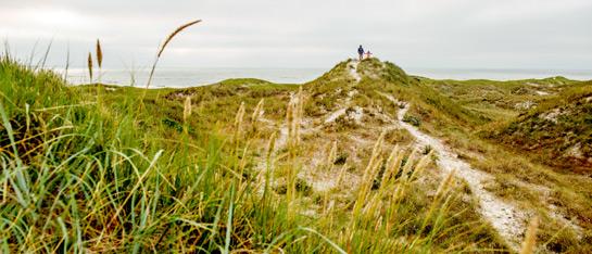Die dänische Nordseeküste  am Henne Strand